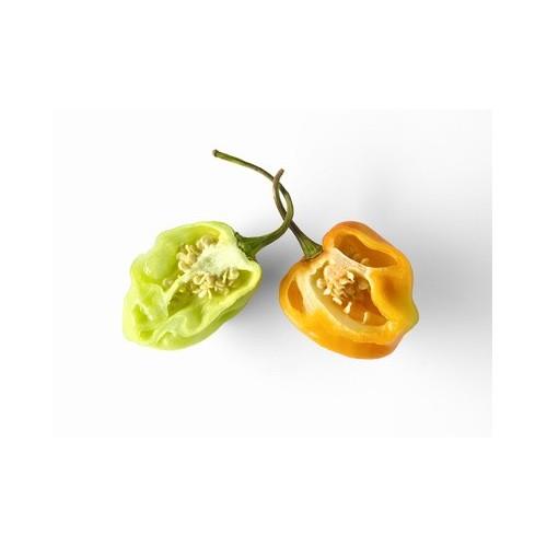 Piment habanero plant