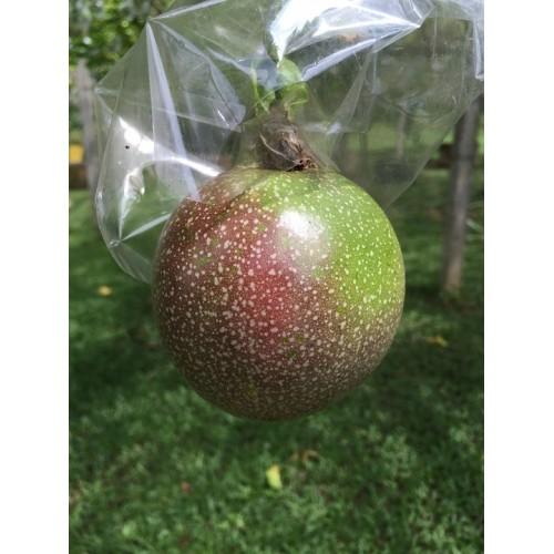 Fruit de la passion plant